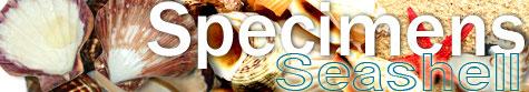 Shell Specimen