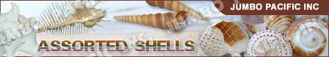 Assorted Shell Specimen