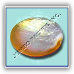 , Raw of Pearls, Fashion Jewelry Wholesale, Fashion Jewelry Wholesale